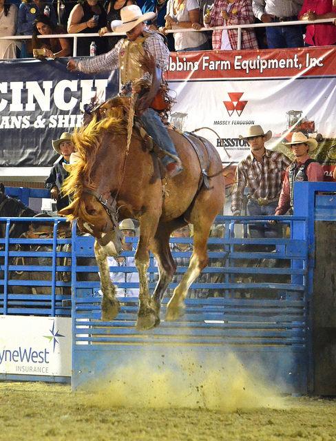 Cowboy riding bucking Bronc