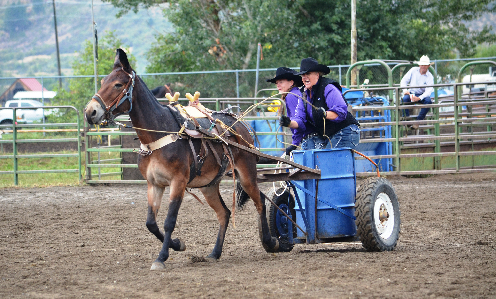 Two cowgirls riding in a blue chariot pulled by a mule competing in the Mule Chariot racing at the Baker COunty Fair and Panhandle Rodeo