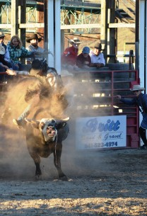 Cowboy riding a bull during the Haines Stampede Rodeo 4th of July in Baker City Oregon