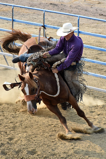 cowboy riding bucking horse at the Carl Wendt Bronc Riding
