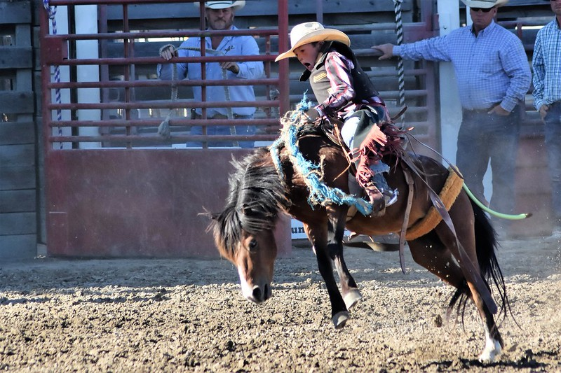 Junior cowboy riding a bucking pony at the Haines Junior Stampede Rodeo