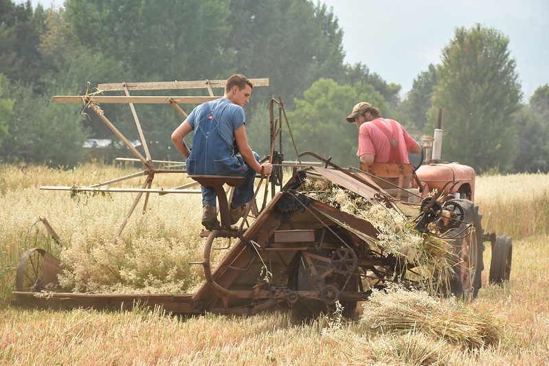 Using vintage tractor to harvest oats in Halfway Oregon